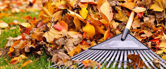 leaf removal, yard cleanups Weston MA
